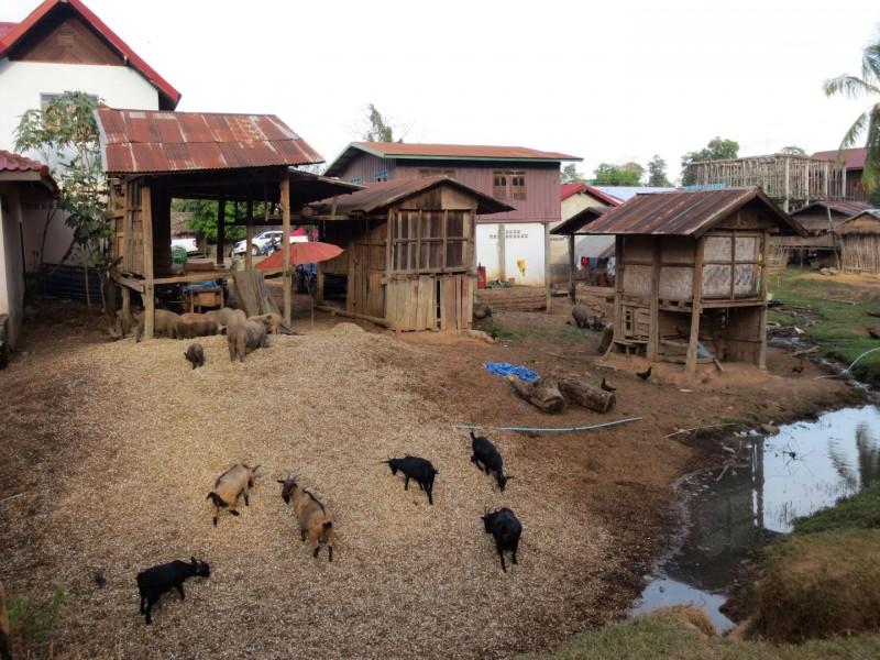 Bauernhof in Tad Lo
