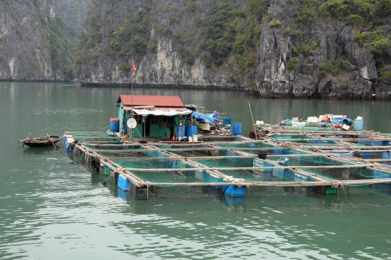 Fischerfarm mit den Netzen, welche bis zu 10 m tief sind.