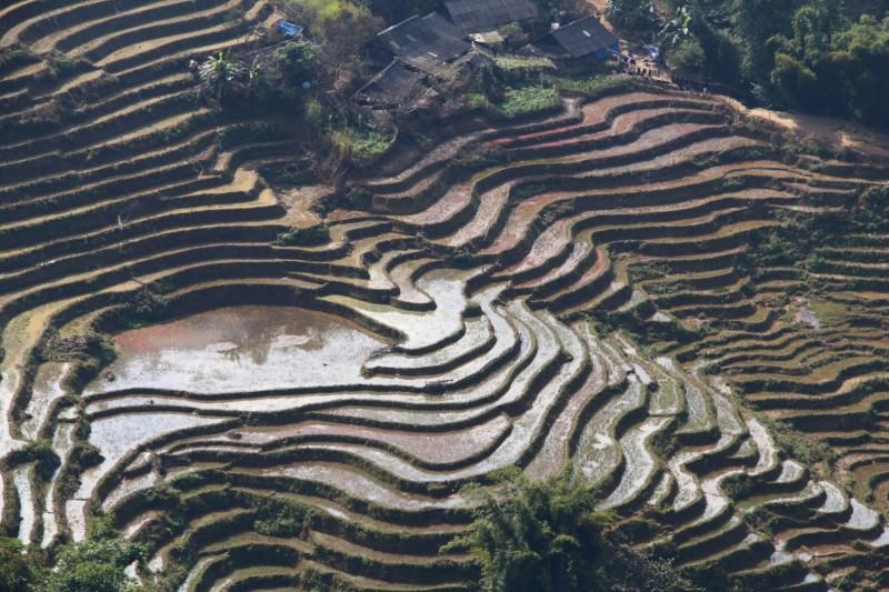 """Reisfelder an den Berghängen. Die """"Becken"""" wurden alle von Hand angefertigt."""