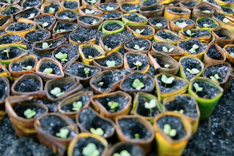 Setzlinge in einer organischen Farm