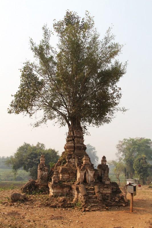 Der Baum in de Pagode oder die Pagode um den Baum?