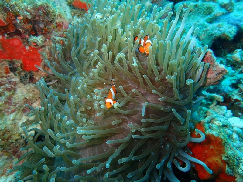 """Nemo haben wir im """"grossen Pool"""" auch noch gefunden!"""