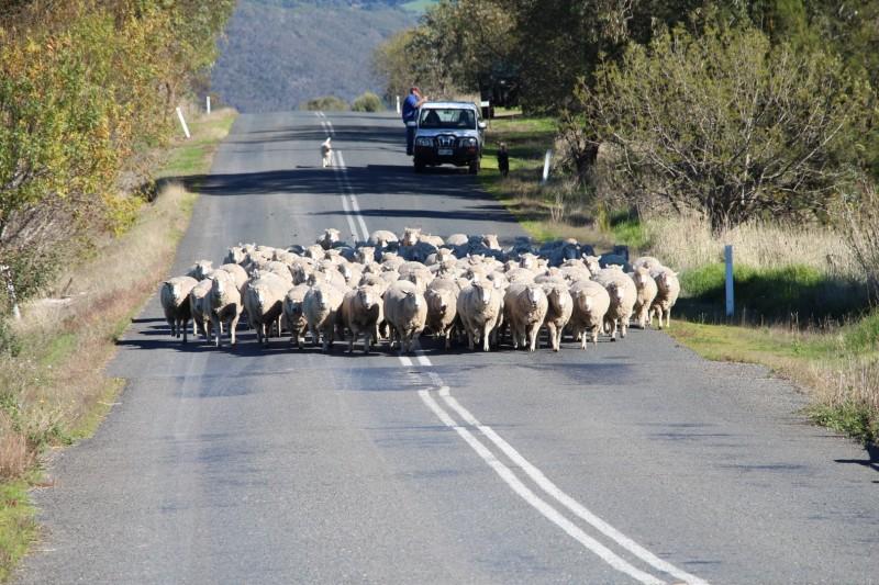 Tagesauslug nach Neuseeland ;-)