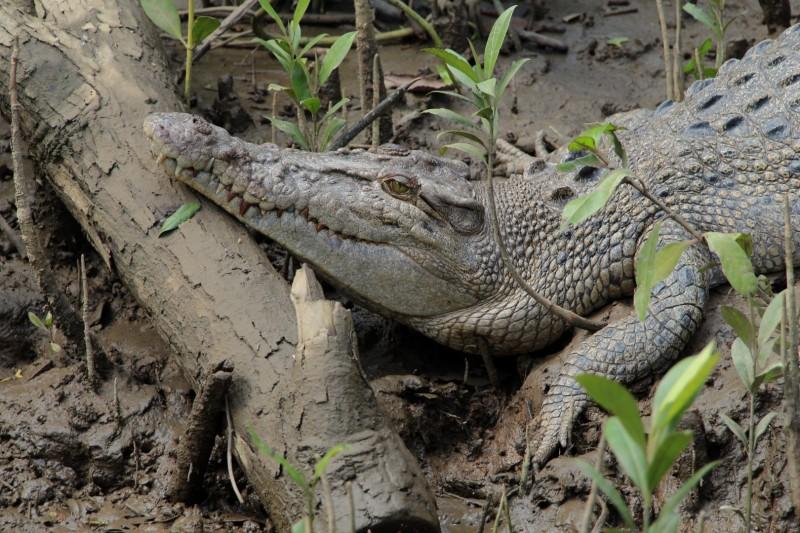 Auf einer Flussfahrt konnten wir einige wildlebende Krokodile sehen. Von 5m Viechern bis zu ....