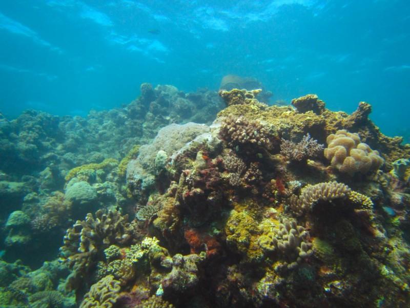 Tauchen im Great Barrier Reef. Wiederein Punkt weniger auf der Bucket List ;-)
