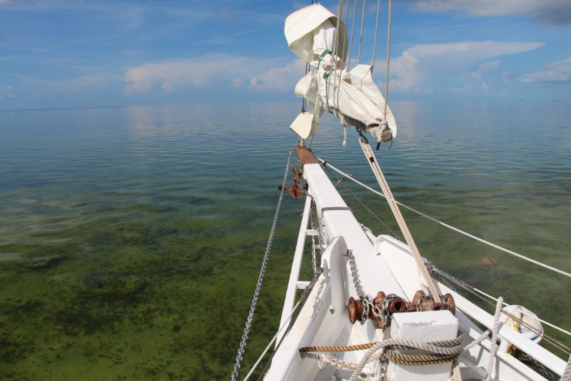 Spiegelglattes Meer ist in den Keys Standard - die durchschnittliche Wassertiefe ist nur etwa 2 m